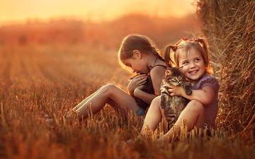 настроение, поле, дети, девочки, котята
