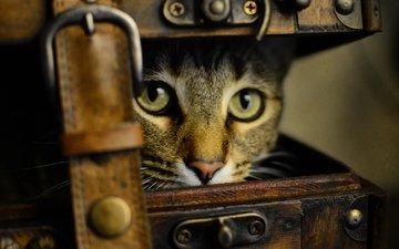 глаза, стиль, кот, старина, ретро, кошка, взгляд, обработка, чемодан, ремень, щель, выглядывает