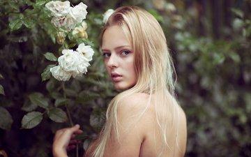 цветы, девушка, блондинка, розы, сад