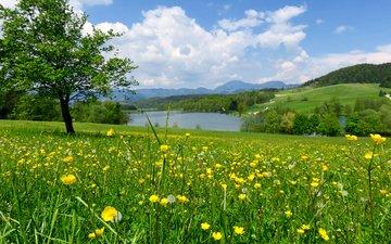 цветы, трава, река, дерево, зелень, лес, поле, склон, лето, луг, одуванчики, словения, лютики, mozirje