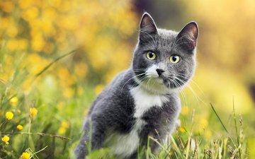 цветы, трава, кот, серый, боке