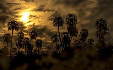 небо, облака, закат, пальмы, силуэты