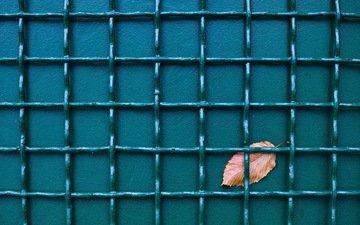 фон, забор, лист, сетка
