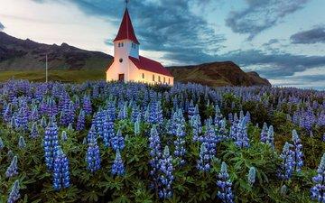 небо, цветы, облака, вечер, храм, поляна, церковь, исландия, люпины