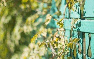 природа, растения, забор, боке, солнечный свет