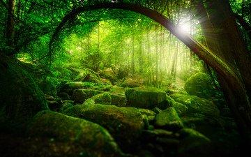 деревья, солнце, камни, зелень, лес, мох, чаща