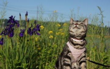 фон, лето, кошка, прогулка
