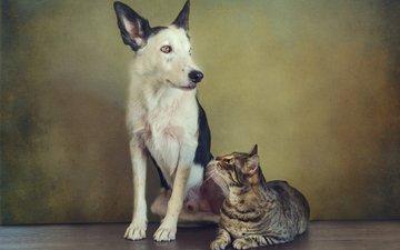 кот, ретро, кошка, собака, пара, пес, сидят, друганы