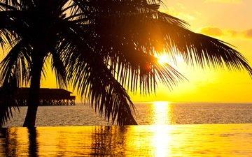 закат, бассейн, океан, пальма, курорт