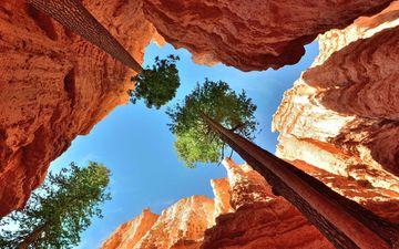 небо, деревья, скалы, каньон, ущелье, кроны, верхушки