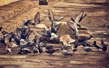 город, крылья, птицы, голуби