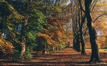 трава, деревья, листья, парк, поле, осень, собака, тени, солнечный свет