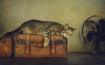 стиль, кот, ретро, кошка, обработка, стол, серый, полосатый, чемоданы, вентилятор, развалился