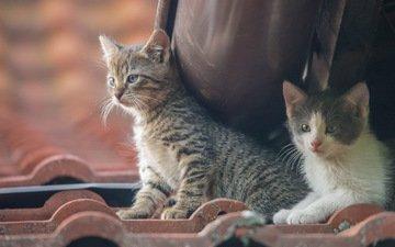 a couple, cats, kids, kittens