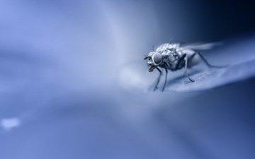 макро, насекомое, фон, крылья, лапки, муха