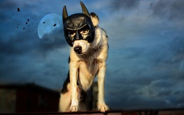 the sky, night, clouds, mask, the moon, dog, birds, roof, batman