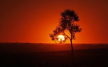 небо, солнце, дерево, закат, силуэт