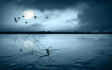 небо, свет, облака, ночь, река, берег, луна, птицы, силуэты, стая