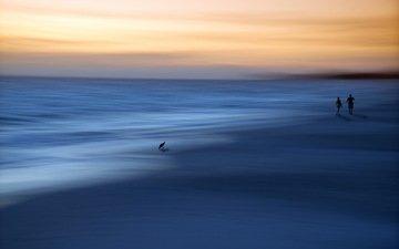 закат, море, люди, птица