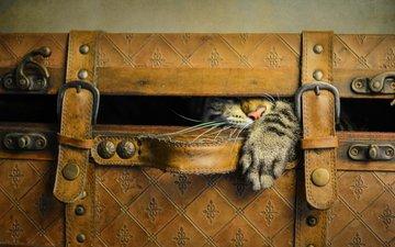 стиль, кот, ретро, кошка, игра, нос, лапа, прятки, чемодан, щель, ремни, высовывается