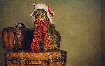 стиль, кот, ретро, грусть, кошка, обработка, печаль, шарф, чемоданы, шапка-ушанка, путешественник, сборы