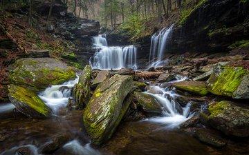 деревья, камни, лес, ручей, водопад, сша, мох, ricketts glen state park