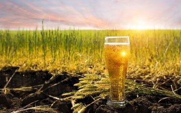 небо, трава, солнце, земля, напиток, поле, горизонт, бокал, колосья, пиво, пузырьки, боке