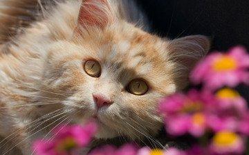 цветы, кот, взгляд