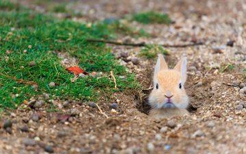 трава, кролик, заяц, нора