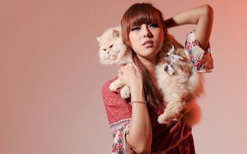 background, cat, model, asian, persian cat