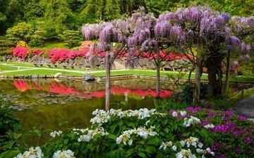 пруд, сиэтл, гортензия, штат вашингтон, японский сад, глициния, вистерия, штате вашингтон, seattle japanese garden