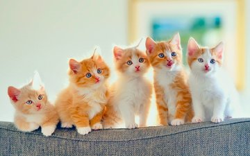 cats, kittens, sofa, sitting, back, look, red