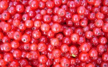 еда, красная, ягоды, смородина