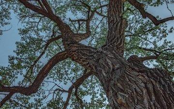 небо, дерево, листья, ветви, неба, листья, дерево