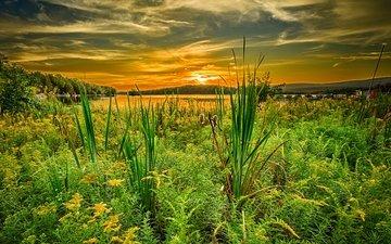the sky, grass, clouds, lake, sunset, pa, pennsylvania