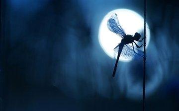 ночь, макро, насекомое, крылья, блики, размытость, стрекоза, силуэт, боке, стебелёк