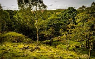 трава, деревья, камни, зелень, лето, великобритания, peak district national park, longshaw estate