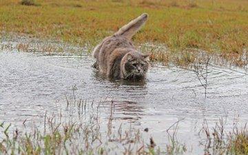 трава, вода, шерсть, кошка