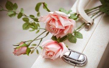 цветы, розы, белый, любовь, букет, розовые, чемодан