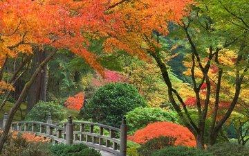 деревья, мостик, парк, кусты, осень, япония