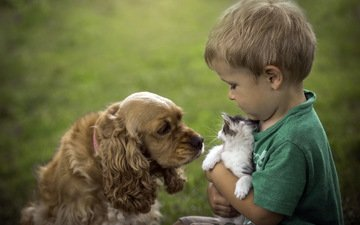 cat, dog, boy, friendship
