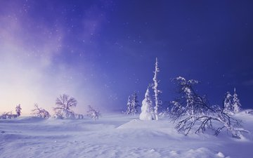 trees, snow, winter, starry sky, the snow, finland, lapland