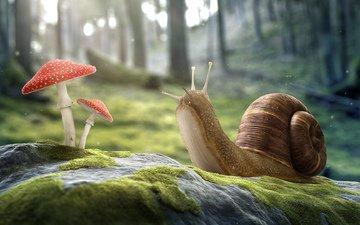 лес, гриб, улитка