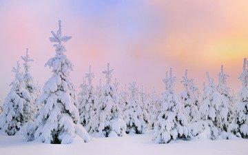 снег, зима, северное сияние, сосны, сугробы