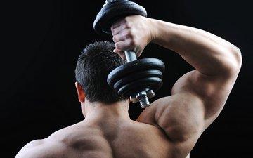 спина, плечи, мужчина, мускулы, сзади, мышцы, бодибилдер, гантели, бодибилдинг, гантеля