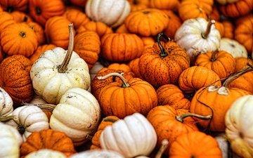 осень, урожай, овощи, тыквы, тыква, опадают, осен, gourds