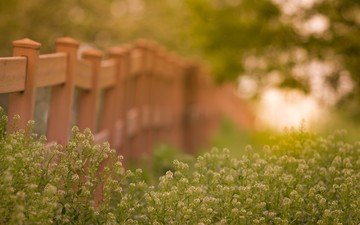 цветы, трава, природа, лето, забор, на природе, боке, изгородь, цветком, летнее