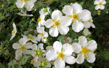 цветение, весна, flowering trees
