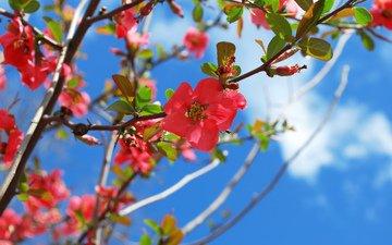 цветение, весна, blossom, весенние, flowering trees