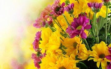 цветы, букет, хризантемы, flowers, bouquet, chrysanthemums